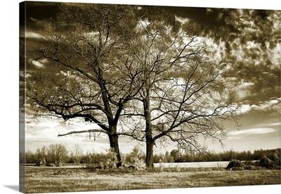 Rolesville Oaks