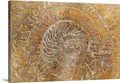 San Miguel Fossils I