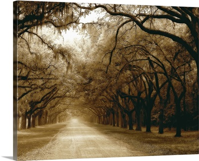 Savannah Oaks I