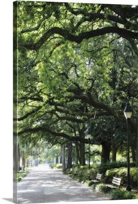 Savannah Sidewalk I