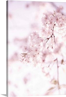 Soft Blooms II