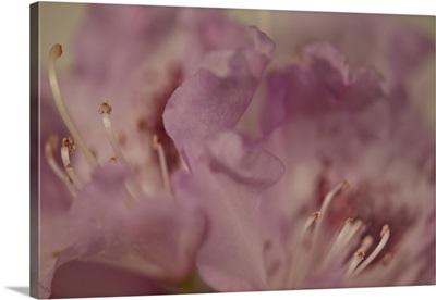 Soft Petals II