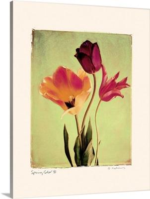 Spring Color III