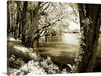 Spring on the River III