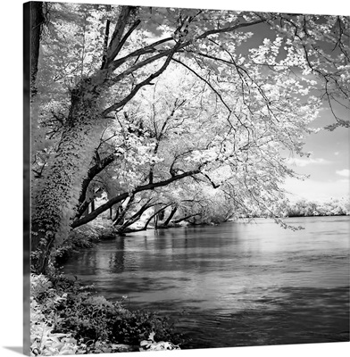Spring on the River Square I
