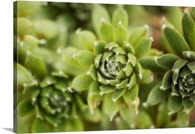 Succulent Array