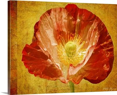 Sun Poppy II