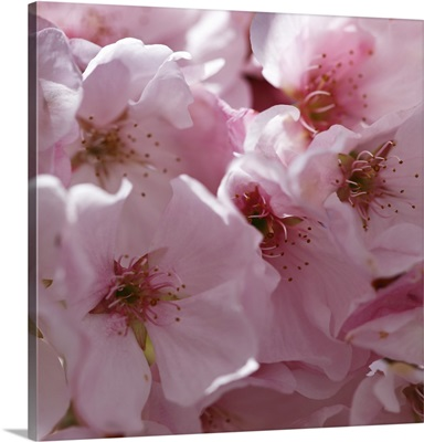 Sunny Blossoms I