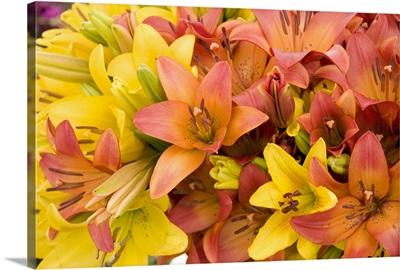 Sunny Lily I