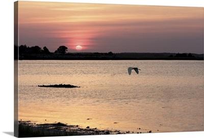 Sunset in the Marsh