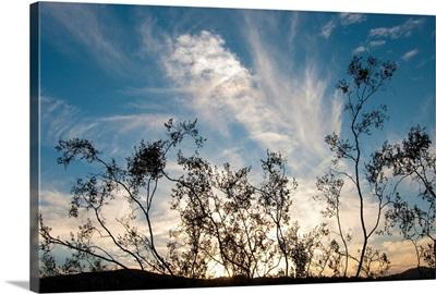 Sunset Silhouette I