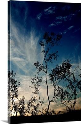 Sunset Silhouette III