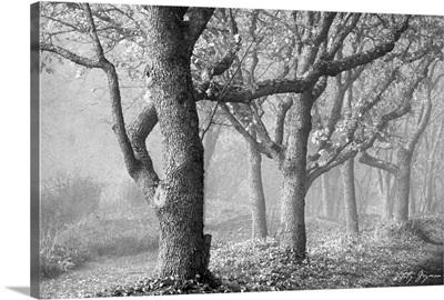 Tree in the Mist B