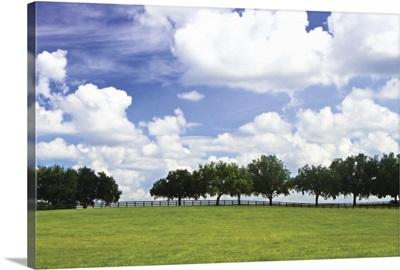 Tree Line 3