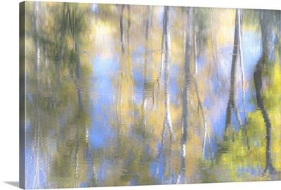 Tree Reflections I