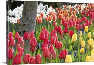 Tulip Bed I