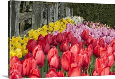 Tulip Bed II