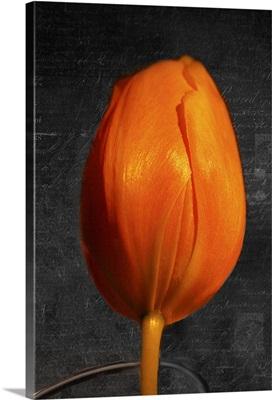 Tulip Letter II