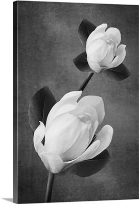 Tulip Tree Duet B