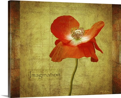 Velvet Poppy Imagination