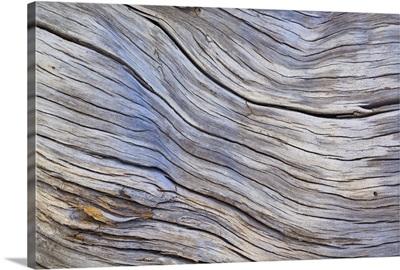Weathered Wood III
