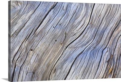 Weathered Wood IV