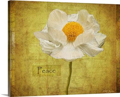 White Poppy Peace