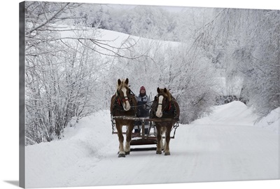 A horse ride in the snow, Quebec, Canada