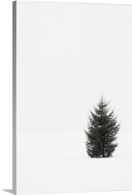 A single evergreen tree in a snowy field on an overcast day.