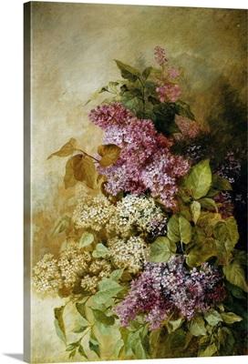 A Study Of Lilac By Claude Massmann