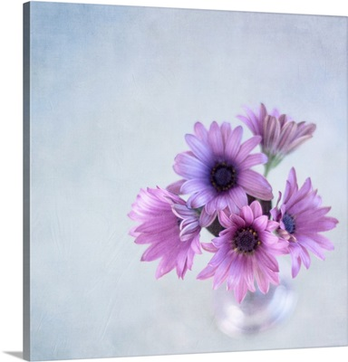 African daisies or Osteoperumum flowers in glass vase.
