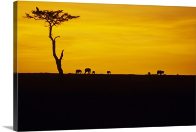 African elephants silhouetted at dawn, Kenya, Africa