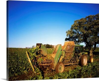 Agriculture, Harvesting Sugar Beet, Co Kilkenny, Ireland