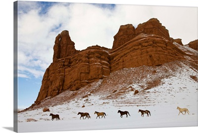American Quarter Horses In Big Horn Mountains Of Wyoming