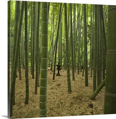 Ancient bamboo grove with  stone lantern, Kamakura, Kanagawa, Japan.