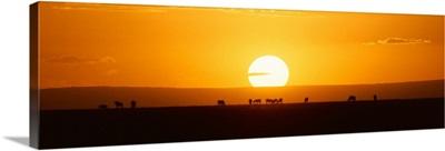 Animal caravan at sunset