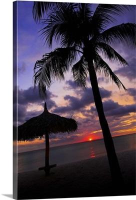 Aruba, silhouette of palm tree and palapa on beach at sunset