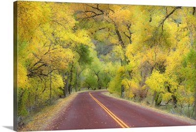 Autumn canopy of trees arching over road in Zion National Park.