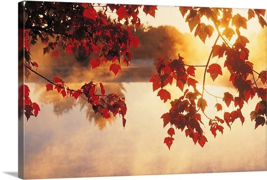 Autumn Leaves, New England, USA