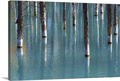 Autumn tree in blue pond.