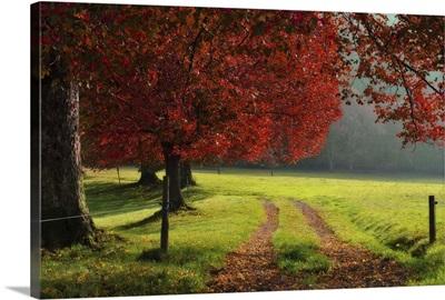Autumn trees in garden.