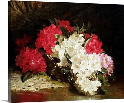 Azaleas by John Fitz Marshall