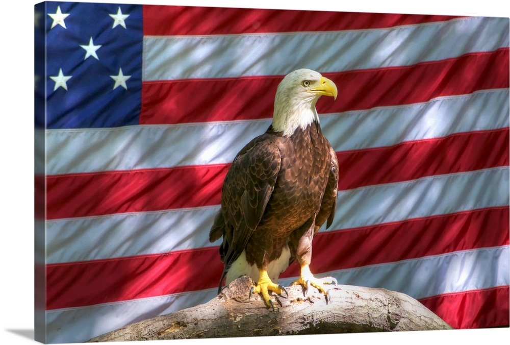 Bald Eagle And American Flag Wall Art Canvas Prints