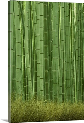 Bamboo forest, Sagano, Kyoto City, Japan, November 2006