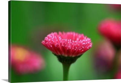 Beautiful pink flower.
