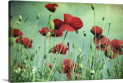 Beautiful red poppies with green-blue textured background