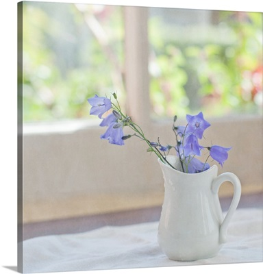 Bell-flowers in small white jug on window.