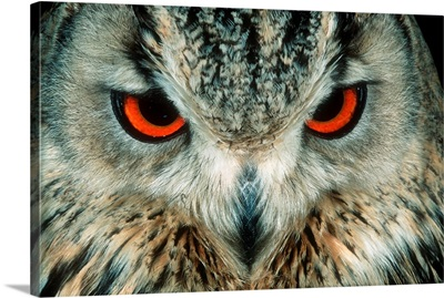 Bengal Eagle-Owl In India