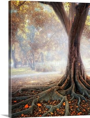 Big tree root in fog.