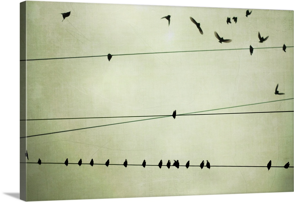 Birds On Telephone Wire